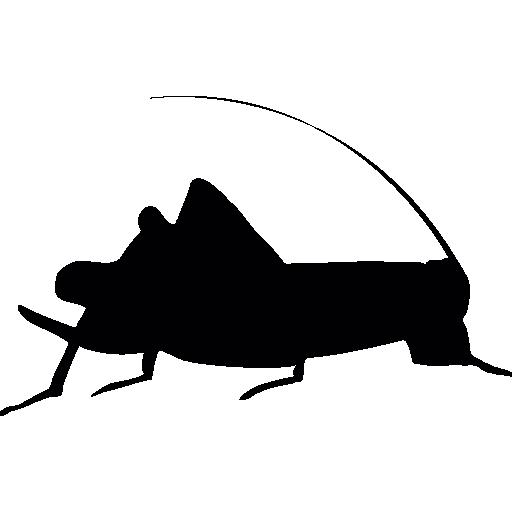 grillon-domestique-pogona